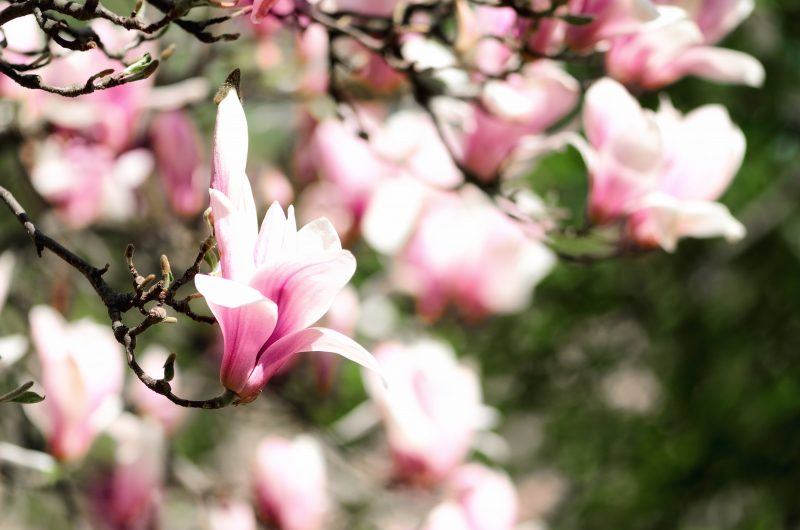 formule1-magnolia-imaginezvous-conseil-en-image