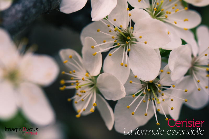 blossom-formule1-imaginezvous