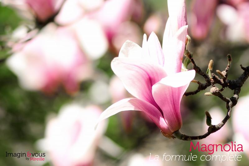 blossom-formule2-imaginezvous